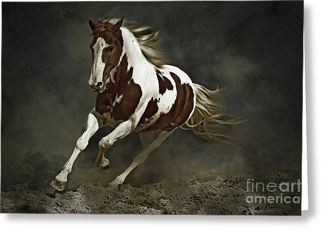 Pinto Horse In Motion Greeting Card