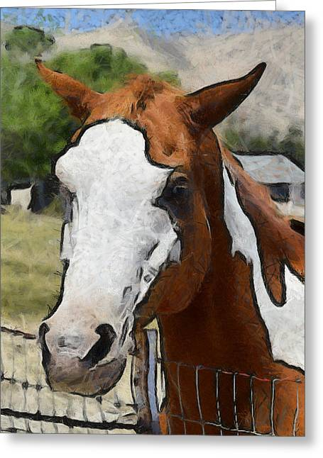 Greeting Card featuring the photograph Pinto In The Pasture Portrait  by Barbara Snyder