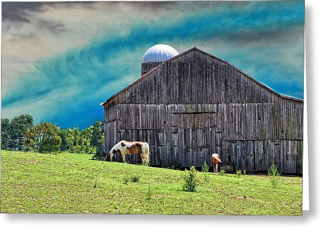 Pinto Summer Greeting Card by Jan Amiss Photography