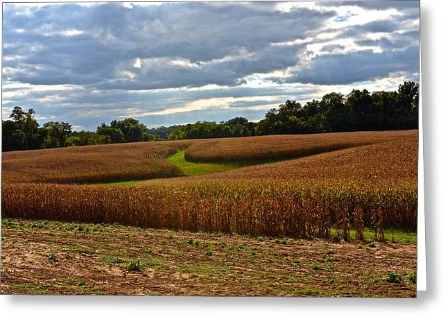 Pinwheel Cornfield Greeting Card