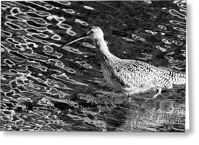 Piper Profile, Black And White Greeting Card