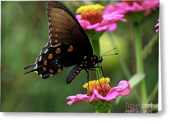Greeting Card featuring the photograph Pipevine Swallowtail Butterfly by Donna Brown