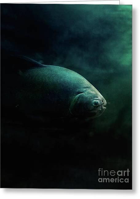 Pirahna Fish Greeting Card