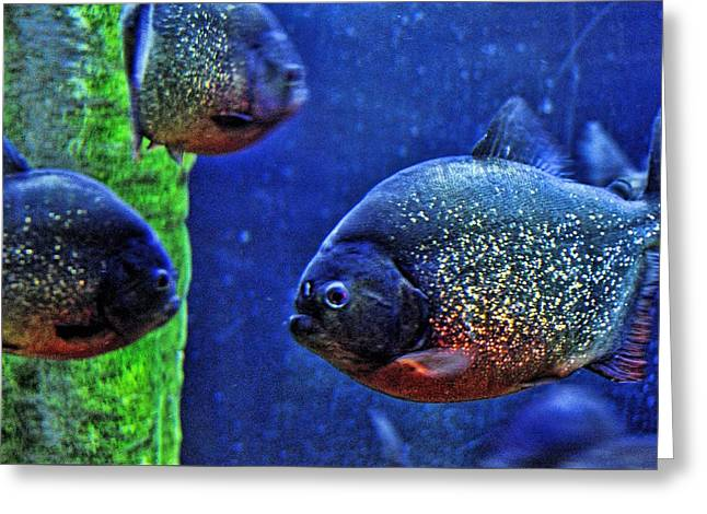 Greeting Card featuring the photograph Piranha Blue by Jan Amiss Photography