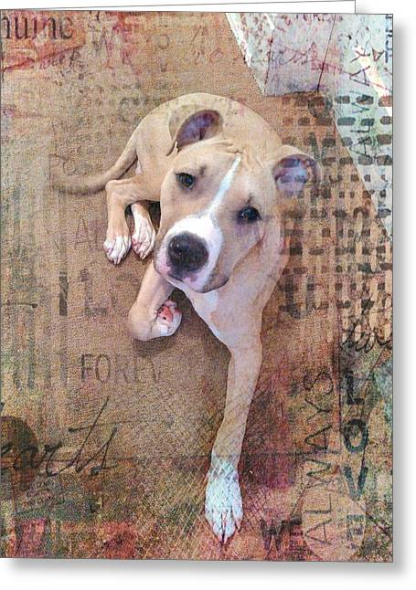 Pit Bull's Expressions Greeting Card by Becky Burt