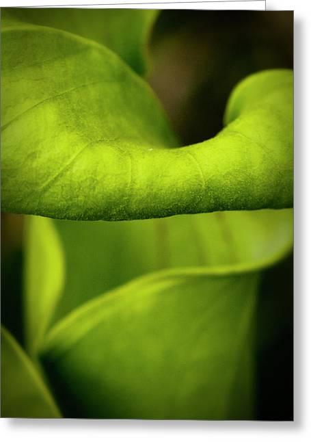 Pitcher Plant Abstract Greeting Card