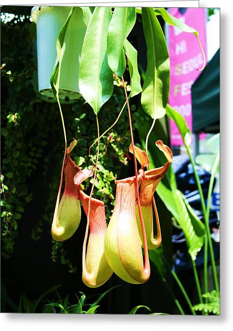 Pitcher Plant Greeting Card by Michael C Crane