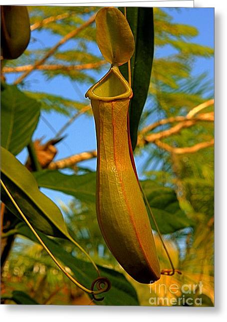 Greeting Card featuring the photograph Pitcher Plant by Nicola Fiscarelli
