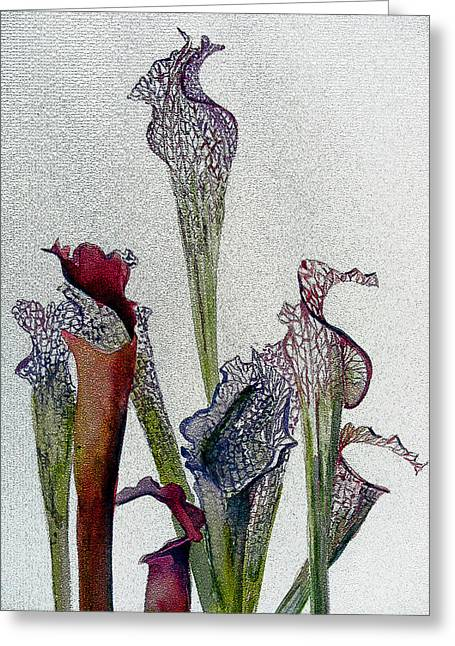Pitchers Plant Greeting Card by Mindy Newman