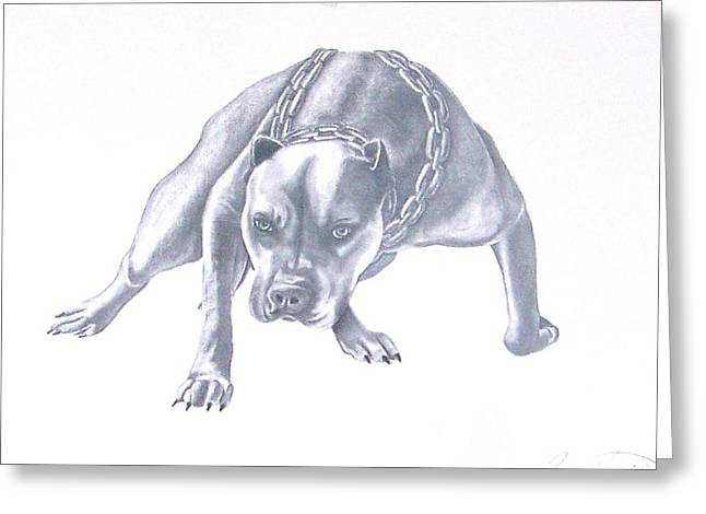 Pitt Bull With Chains Greeting Card by Rebecca Bellomo