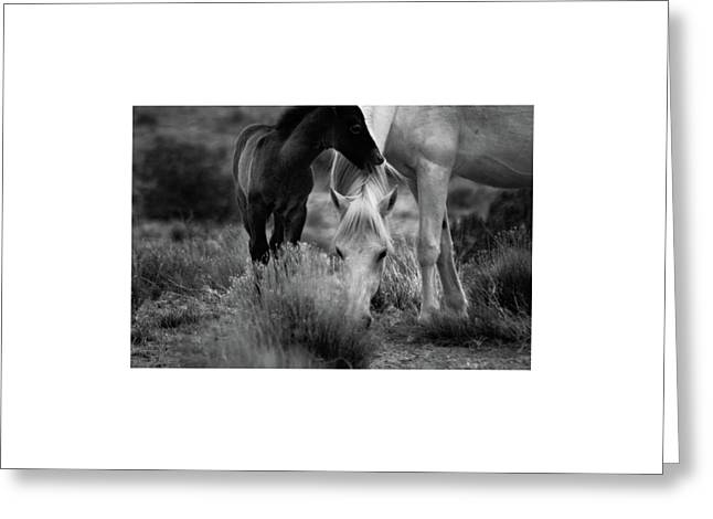 Greeting Card featuring the photograph Placitas 2 by Catherine Sobredo
