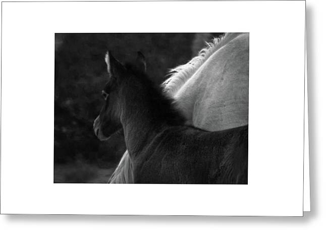 Greeting Card featuring the photograph Placitas 9 by Catherine Sobredo