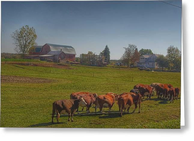 1014 - Plain Road Farm And Cows I Greeting Card