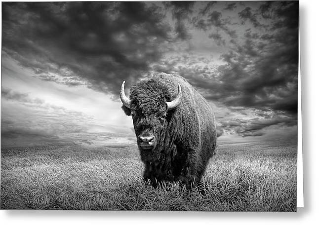 Plains Buffalo On The Prairie In Black And White Greeting Card