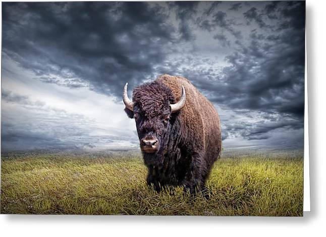 Plains Buffalo On The Prairie Greeting Card