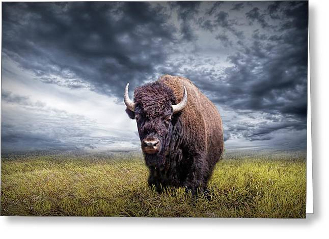 Plains Buffalo On The Prairie Greeting Card