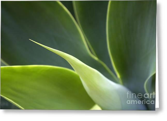 Plant Abstract Greeting Card by Tony Cordoza