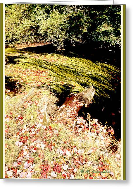 Plant Life In An Autumn Stream Greeting Card by A Gurmankin