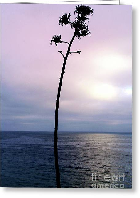 Greeting Card featuring the photograph Plant Silhouette Over Ocean by Mariola Bitner