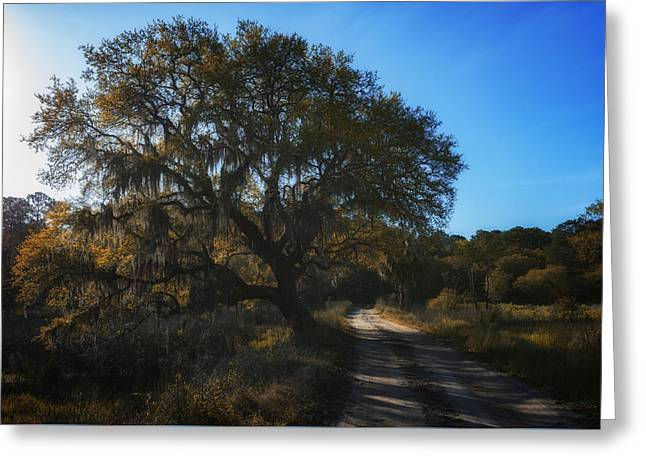 Plantation Road Greeting Card by Rick Berk