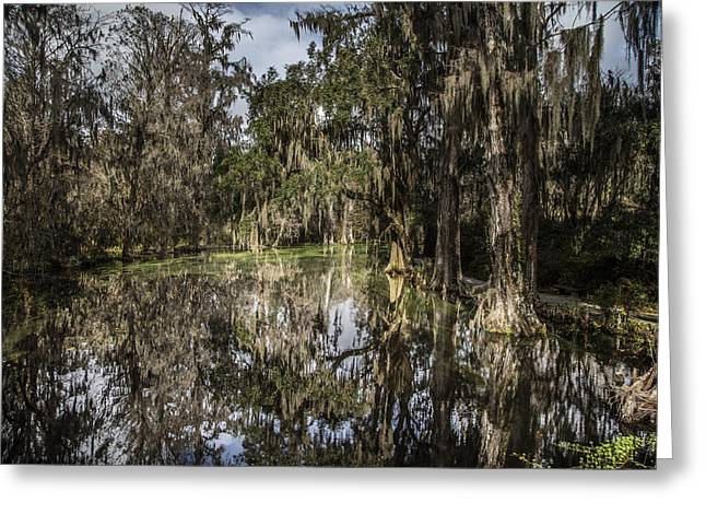 Plantation Swamp 1 Greeting Card by John McGraw