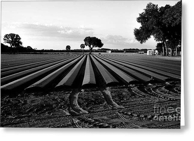 Planted Fields Greeting Card by David Lee Thompson