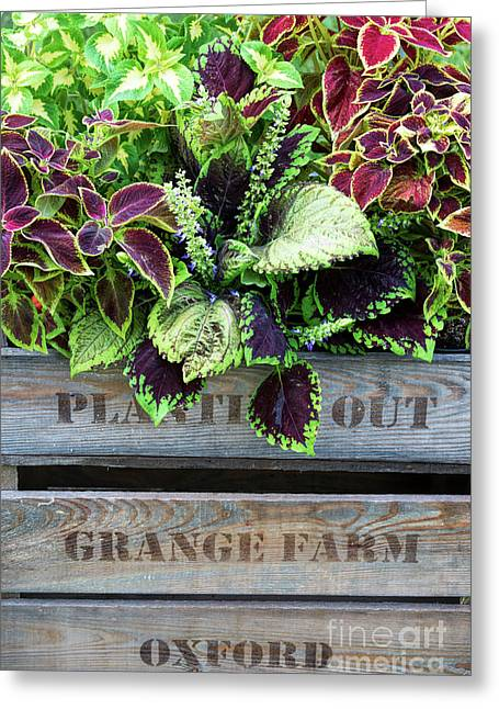 Planting Out Greeting Card
