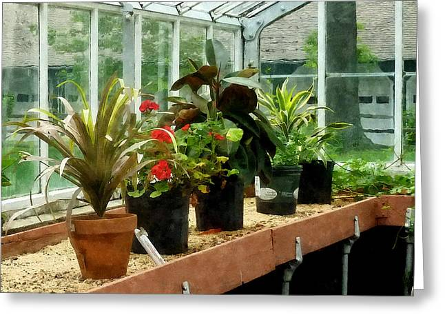 Plants In Greenhouse Greeting Card by Susan Savad