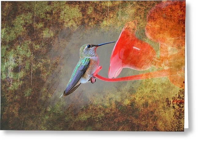 Plate 153 - Hummingbird Grunge Series Greeting Card