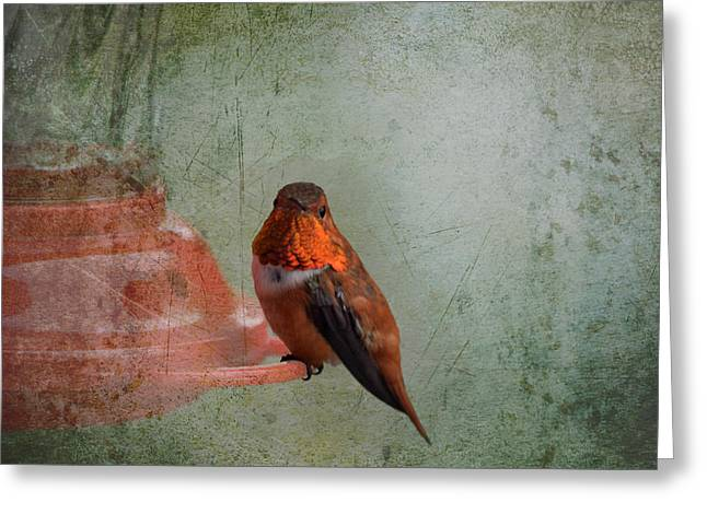 Plate 164 - Hummingbird Grunge Series Greeting Card