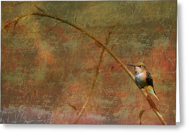 Plate 225 - Hummingbird Grunge Series Greeting Card