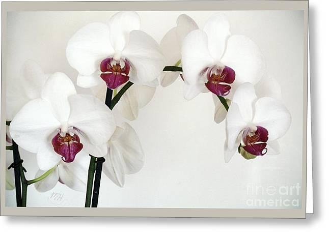 Platnum Beauty Orchids Greeting Card by Marsha Heiken