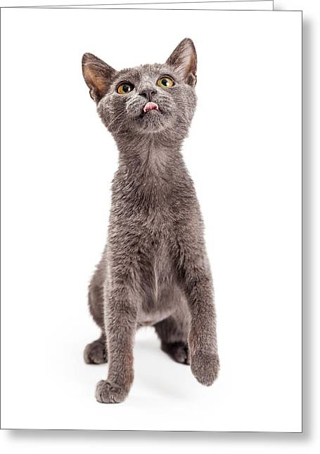 Playful And Hungry Kitten Looking Up Greeting Card