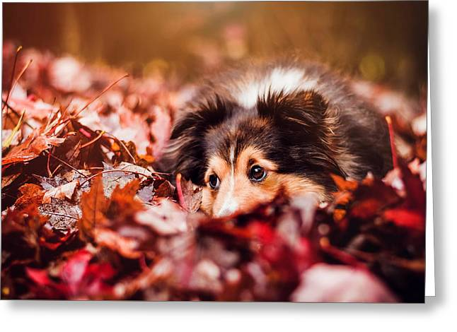 Playful Autumn Dog Greeting Card