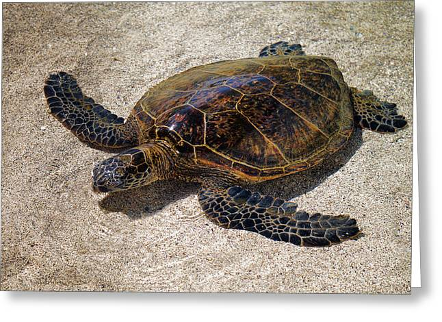 Playful Honu Greeting Card