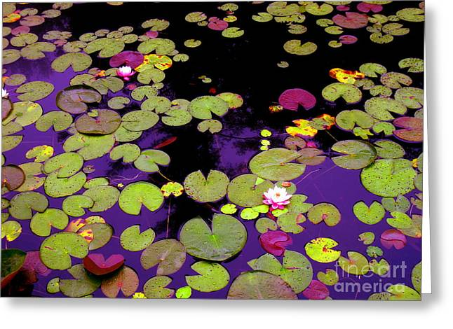 Playful Pond Lilies Greeting Card