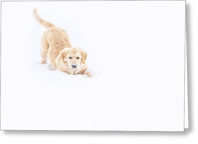 Playful Puppy In So Much Snow Greeting Card