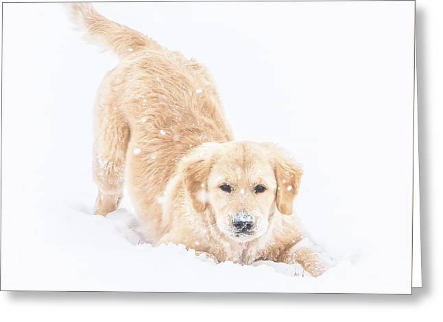 Playful Puppy Greeting Card