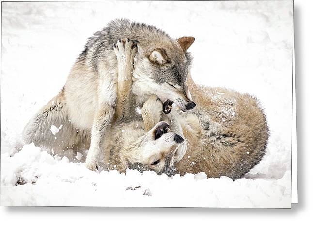 Playful Wolves In Winter Greeting Card