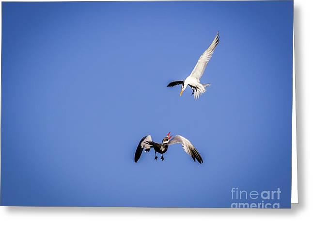 Playing Terns Greeting Card