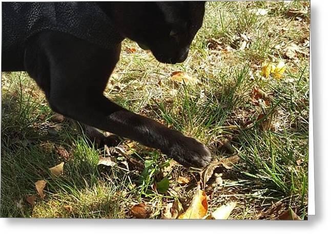 Playing With Fall Foliage  #falloffame Greeting Card