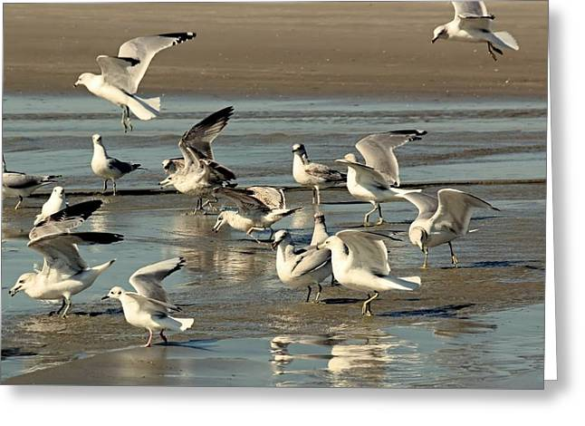 Playtime For Gulls Greeting Card