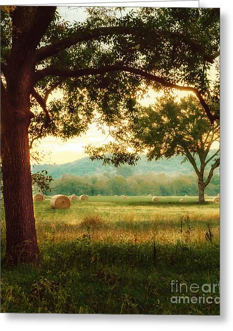 Pleasant Morning Greeting Card by Tamyra Ayles
