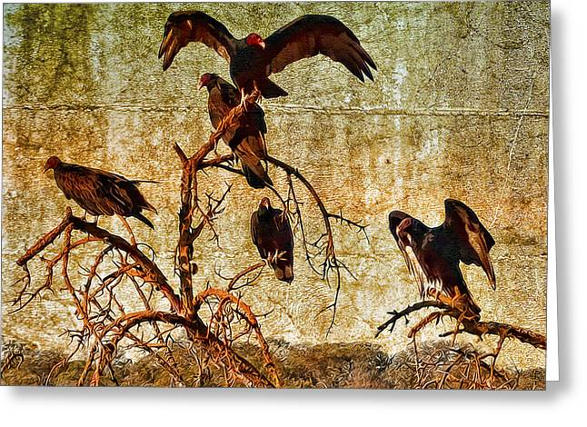 Greeting Card featuring the photograph Pleasanton Vultures by Steve Siri