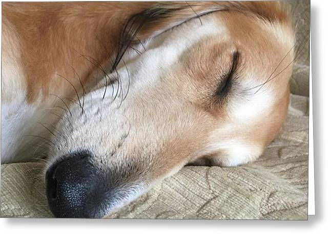 Please Be Quiet. Saluki Greeting Card