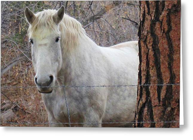 Please Come Pet Me Greeting Card by Tammy Sutherland
