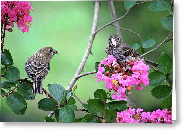 Greeting Card featuring the photograph Please, May I Have Some? by Trina Ansel