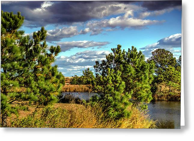 Pleasure House Point Natural Area  Greeting Card
