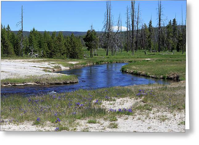 Pleated Gentians Beside Iron Creek In Black Sand Basin Greeting Card by Louise Heusinkveld