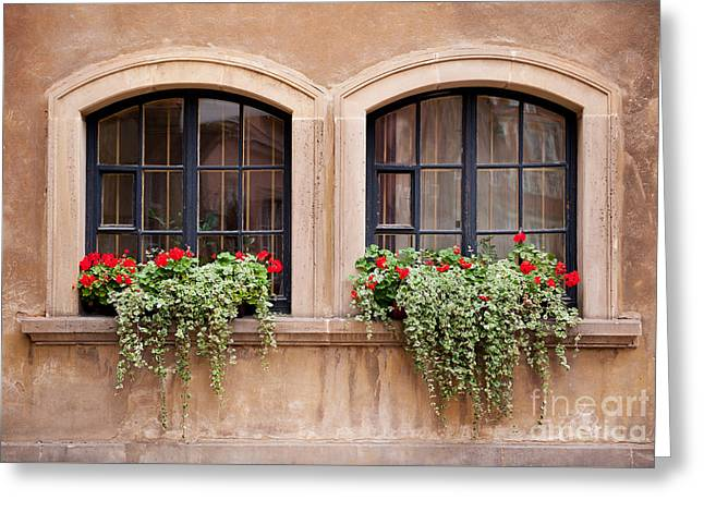 Plectranthus Coleoides And Red Pelargonium  Greeting Card by Arletta Cwalina
